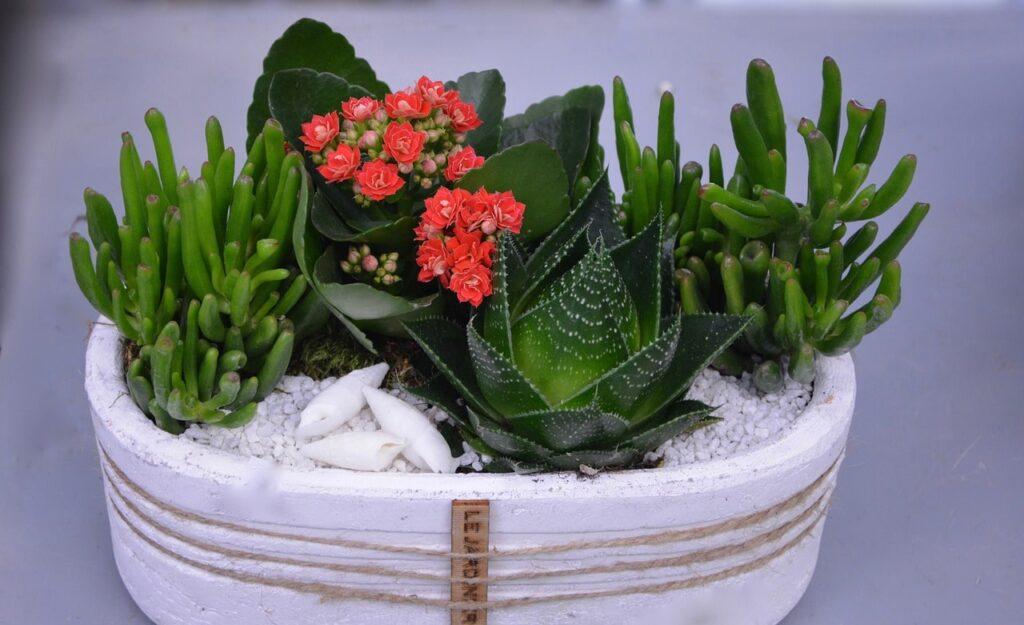 Come decorare le piante grasse per arredare casa