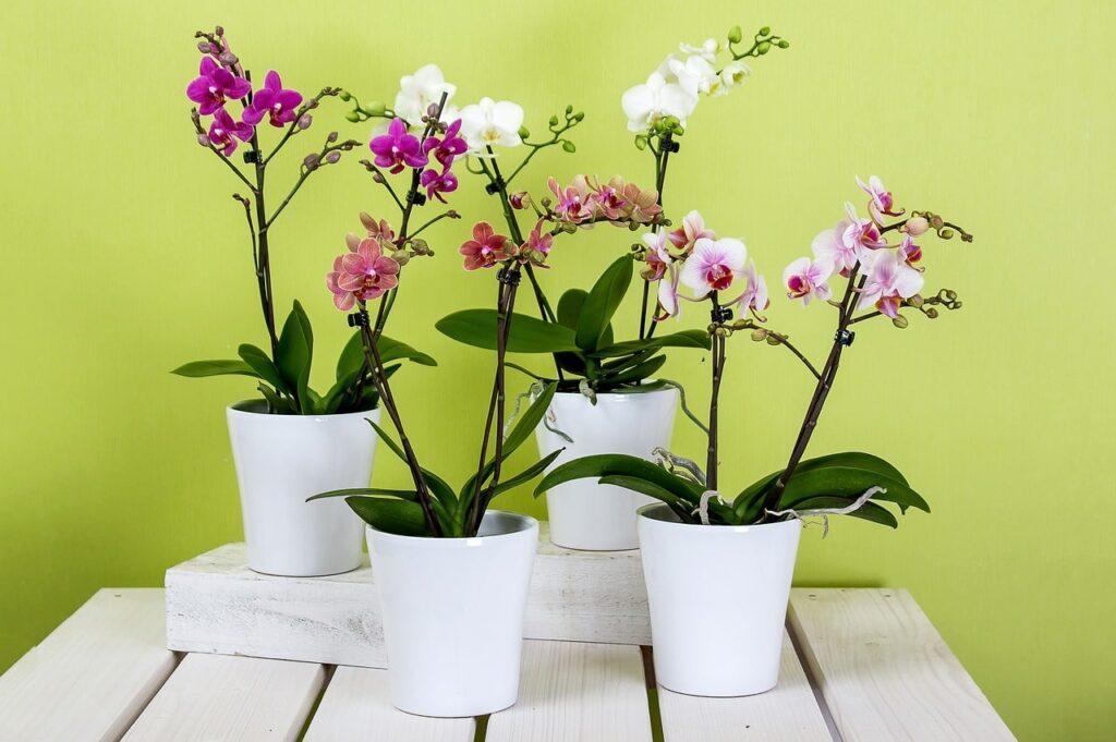 Orchidee Piante da interno per arredare casa