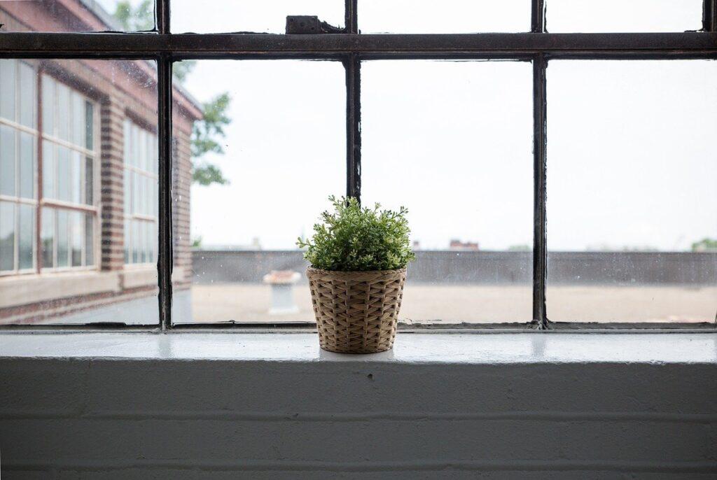 Curare le piante da interno