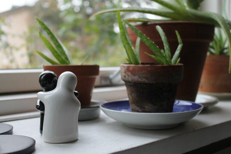 10 errori comuni che fanno morire le piante in casa - La ...