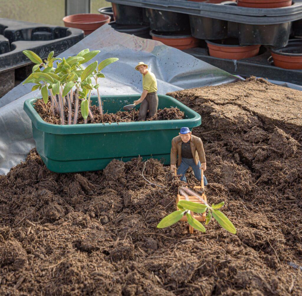 Come realizzare un giardino in miniatura