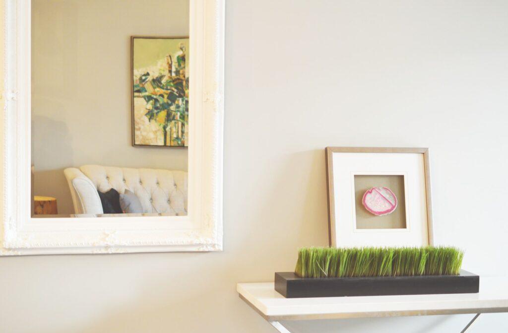consigli sulle piante in casa