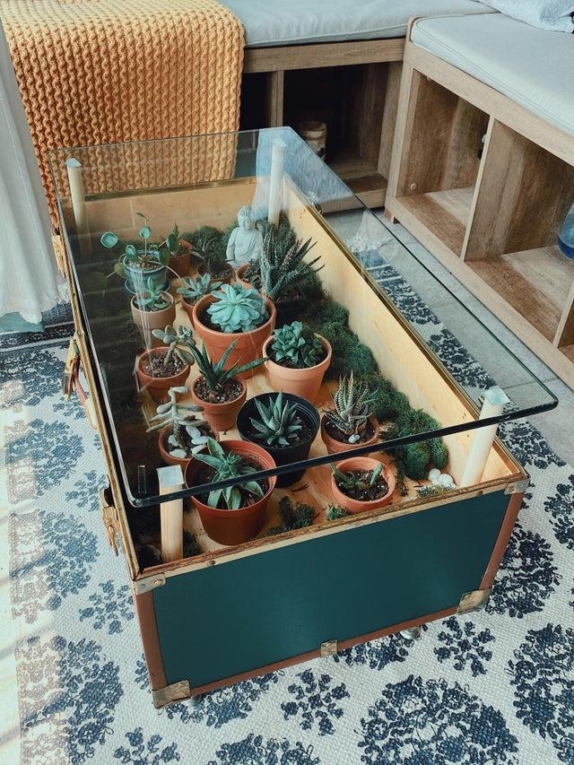 decorare tavoli e tavolini con le piante grasse