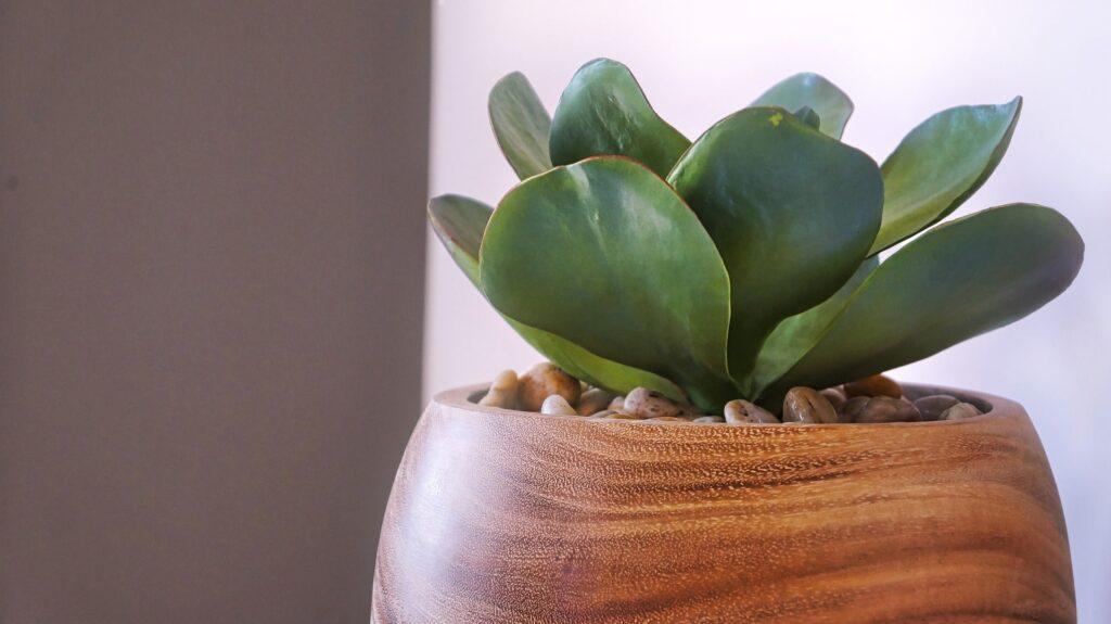 vaso in legno