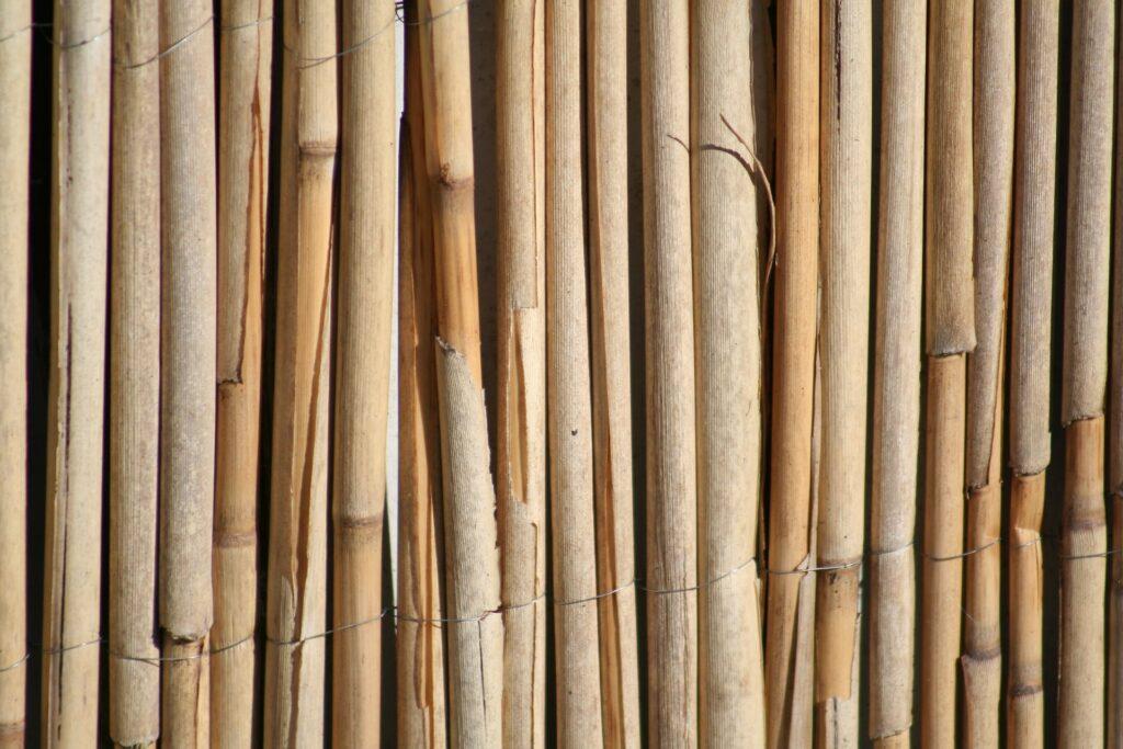 Recinto con le canne di bambù