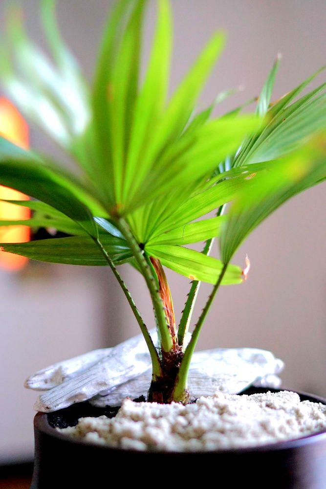 Come arredare con le piante da interno