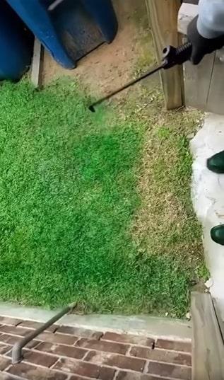 Questi ragazzi colorano il prato di verde