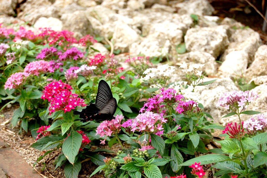 Idee bellissime per un giardino perfetto